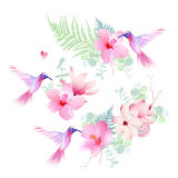 Delicate tropical flowers with flying hummingbirds vector design Stock Photos