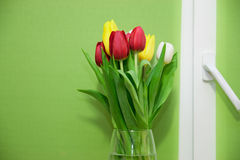 Delicate tulips flower close up Stock Image
