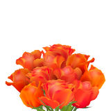 Delicate vector roses Royalty Free Stock Photo