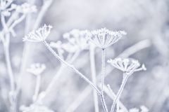 Delicate openwork flowers in the frost. royalty free stock photos