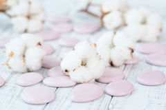 Delicate white cotton flowers and pebbles Stock Photo