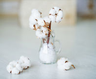 Delicate white cotton flowers Royalty Free Stock Photo