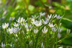 Delicate white flower garden on sunny day Stock Photos