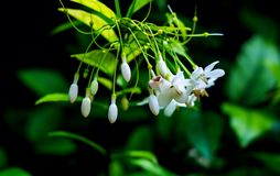 Delicate white flowers. On a green background royalty free stock images