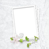 Delicate white frame Royalty Free Stock Photo