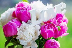 Delicate white and pink peonies Stock Image