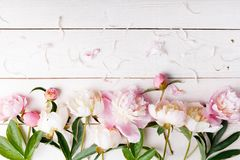 Delicate white pink peony with petals flowers and white ribbon on wooden board. Overhead top view, flat lay. Copy space. Birthday,. Mother& x27;s, Valentines stock image