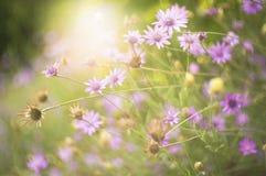 Delicate wild beauty Stock Image
