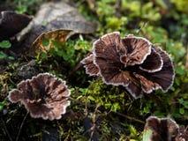 Delicate wild fungi Stock Image