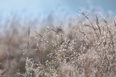 Delicate wild grass backlit in the early morning sun with bokeh Stock Photography