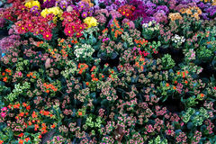 Delicated colorful little spring flowers top view stock photography