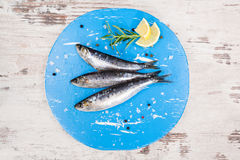 Delicious anchovy fish. Royalty Free Stock Image
