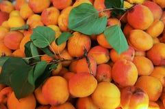 Delicious apricot background Stock Photo