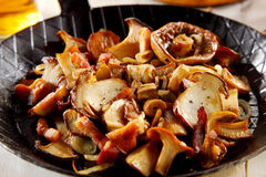Delicious autumn meal of fresh mushrooms. Delicious autumn meal of assorted fresh fried seasonal mushrooms in a pan ready to be served royalty free stock photo