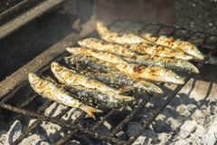 Delicious barbecued sardines - traditional food from Portugal. Delicious barbecued sardines - traditional Portuguese food, Porto, Portugal royalty free stock photography