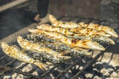Delicious barbecued sardines - traditional food from Portugal. Delicious barbecued sardines - traditional Portuguese food, Porto, Portugal stock image