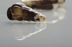 Delicious Belgian chocolates sea animals. Royalty Free Stock Photos