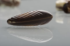 Delicious Belgian chocolates seashells. Stock Images