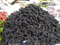 Delicious black cherry fruit of North East India. Enjoy the fruit in  the summer royalty free stock photo
