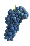 Delicious blue grape  Royalty Free Stock Photo