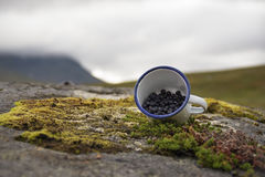 Delicious blueberries displayed in cup picked from rich Swedish grounds, nature background. Millions of blueberries are growing in the Sarek national park of stock photos
