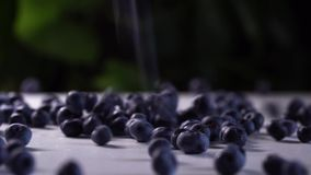 Delicious blueberries falling on a white table. cinematic view with green plants in the background. Delicious blueberries falling on a white table. cinematic stock video footage