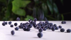 Delicious blueberries falling on a white table. cinematic view with green plants in the background. Delicious blueberries falling on a white table. cinematic stock footage