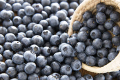 Delicious blueberries royalty free stock photos