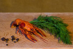 Delicious boiled crayfish with dill and  pepper Royalty Free Stock Images