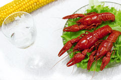 Delicious boiled lobster dish Stock Photography