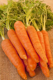Delicious bunch of fresh and crunchy carrots Royalty Free Stock Photography