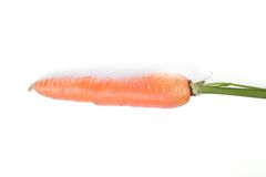 Delicious carrot Stock Photography