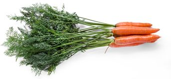 Delicious carrot Stock Image
