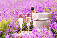 Delicious champagne over lavender field. Delicious champagne over lavender flowers field at sunset light. Violet flowers on the background Stock Image