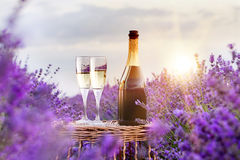 Delicious champagne over lavender. Royalty Free Stock Image