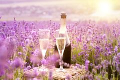 Delicious champagne over lavender. stock photos