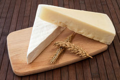 Delicious chese stock photo