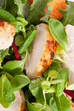 Delicious chicken salad background. Royalty Free Stock Photography
