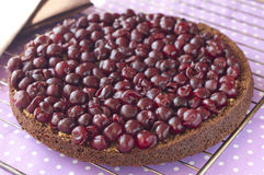 Delicious chocolate cherry tart Royalty Free Stock Images