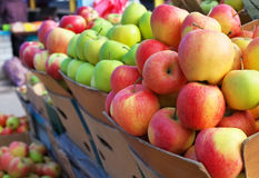 Delicious colorful apples in the boxes Royalty Free Stock Image