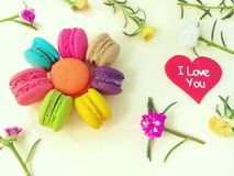 Delicious macaron, colorful plasticine clay, beautiful flower royalty free stock photos