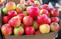 Delicious colorful sweet-sour apples in the box Royalty Free Stock Photography