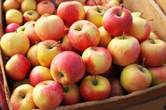 Delicious colorful sweet-sour apples in the box Stock Photo