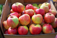 Delicious colorful sweet-sour apples in the box Royalty Free Stock Images
