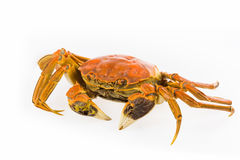 Delicious cooked crab closeup Stock Photo