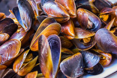 Delicious cooked mussels Stock Photo