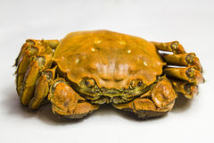 Delicious crab Royalty Free Stock Photos