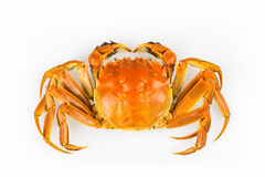 Delicious crab Stock Photos