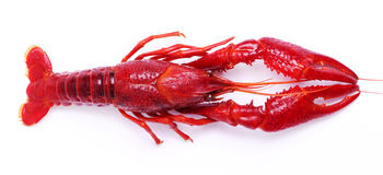 Delicious crayfish Royalty Free Stock Photography