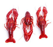 Delicious crayfish Royalty Free Stock Images